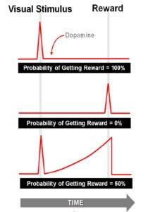 research-probability-on-dopamine