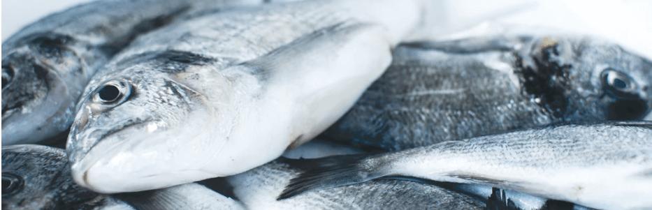 Snowfly Fish Microwave