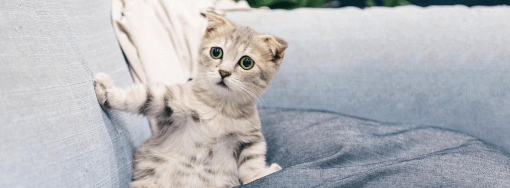 Snowfly-Customer-Service-Kitten-unsplash